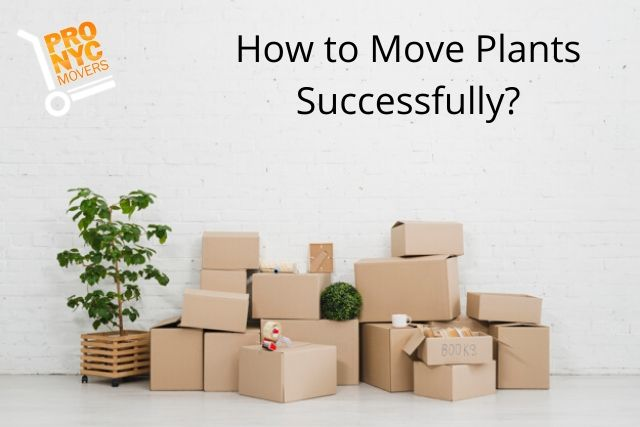 How to Move Plants Successfully Moving Companies NYC Share Ideas